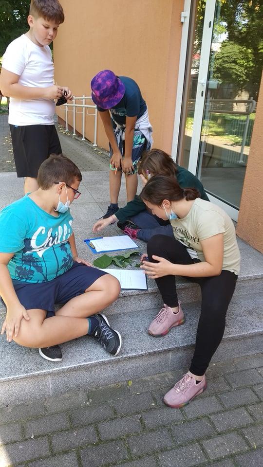 Uczniowie przyglądający się liściom.